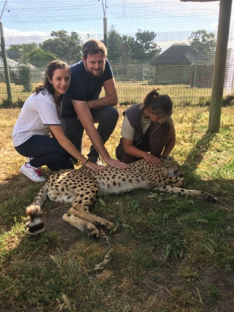 Getting up close and personal to a cheetah